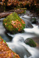 Fall Autumn Leaves Forest Stream Bubbling Brook Mossy River