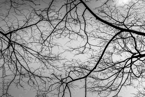 black and white naked trees - 79406461