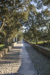 View of rural cobblestone road near Fatima, Portugal.