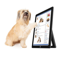 Dog Using Social Media on Tablet Device