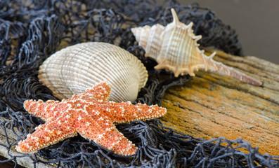 Starfish and seashells on dirftwood with fishnet