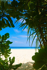 Invitation to pass through the thickets on a beautiful beach