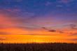Sundown Maize - 79418614