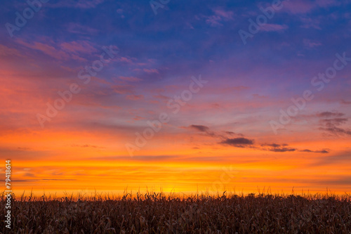 Tuinposter Zonsondergang Sundown Maize
