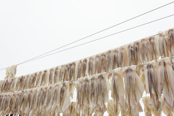 Squid drying on clothesline