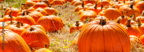 Foto op Plexiglas Planten Pumpkins backlit in a straw field pumpkin patch
