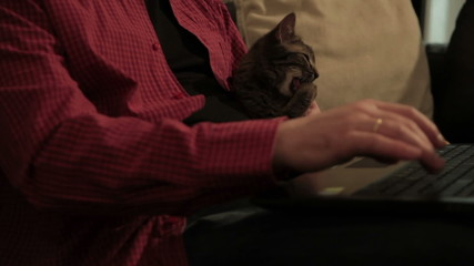 Man holding cat and typing on laptop at home. Close up.Tilt up.