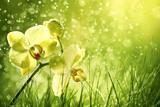 Fototapety Orchid flower in the field