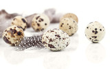 quail eggs with feather on white background