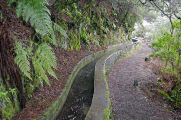 Nacientes Marcos y Cordero - beautiful trail on the island La Pa