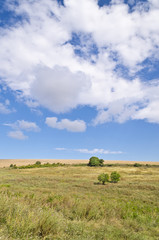 Sunny Blue Sky, Meadow and a tree near the village Katselovo