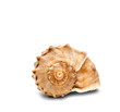 Spiral shell front view isolated on white - 79439624