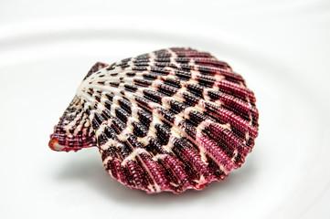 Pink sea shel on white dish