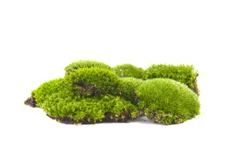 Green moss isolated