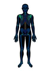 X ray skeleton. Vector flat illustration