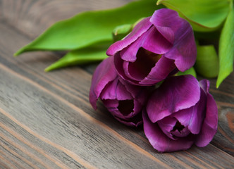purple colored tulip flowers