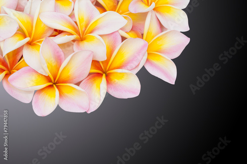 Fotobehang Frangipani Plumeria flower isolated on the black background