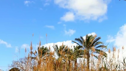 Clouds time lapse over palm trees and tall grass