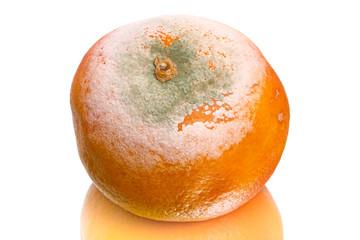Spoiled tangerine on white