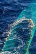 Hauling otter trawl fishing nets on the Atlantic Sea - 79451013