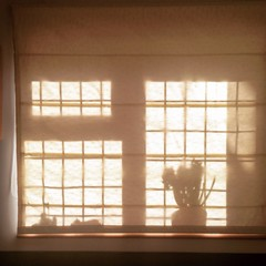 Sunlight through window blind