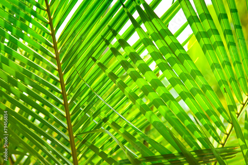 palm leaves macro green leaves background