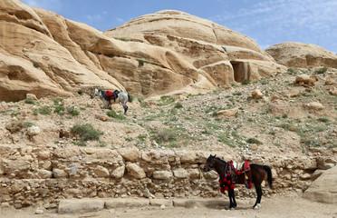 Bedouins horses in Petra,  Jordan