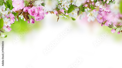 Foto op Canvas Tulp Beautiful spring blossoms background