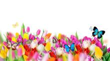 "Постер, картина, фотообои ""Beautiful bouquet of tulips."""