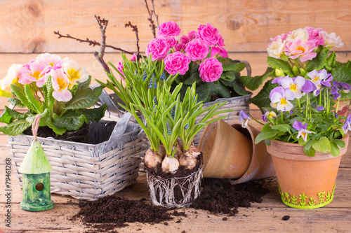 Leinwanddruck Bild Pflanzschalen mit Frühlingsblumen bepflanzen