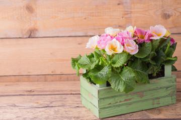 Frühlingsblumen in Kiste vor Holzhintergrund