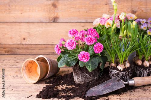 Fotobehang Pansies Frühlingsblumen pflanzen