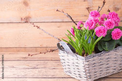 Zdjęcia na płótnie, fototapety, obrazy : Deko im Frühling - Pflanzkorb mit Blumen und Zweigen