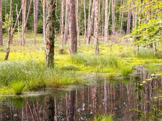 Moor im Wald