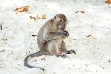 Affen Strand