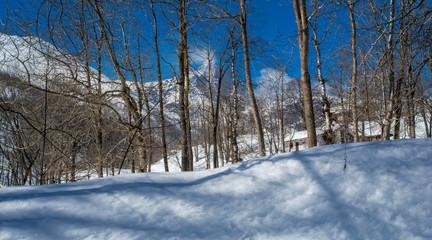 La neve ed il Bosco