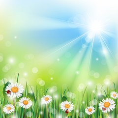 Spring Background with Grass and Flowers on a Sunny Day
