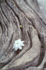 white flower on wood background