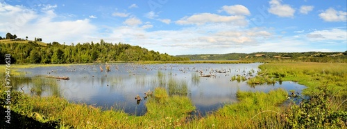 Pond in marshland on the island of Chiloe, Patagonia, Chile - 79476638