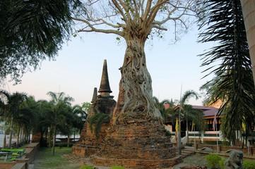 Banyan tree overgrowing ancient pagoda, Ayutthaya, Thailand