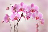 Pink orchids flower background design