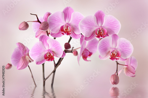 In de dag Orchidee Pink orchids flower background design