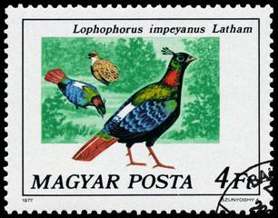 Stamp printed in Hungary shows Himalayan monal