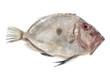 Zeus faber Fish - 79483814