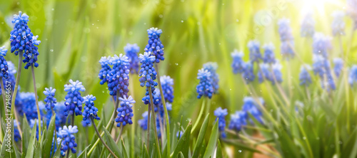 Foto op Plexiglas Lente Spring and easter background with spring flowers