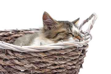 kitten sleeps in a wicker basket on a white background
