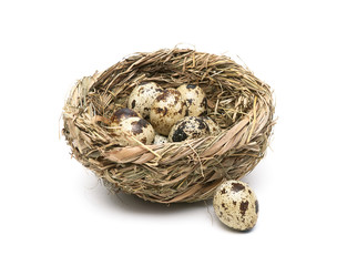 quail eggs in a nest close up isolated on white background