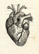 Leinwanddruck Bild - Human heart