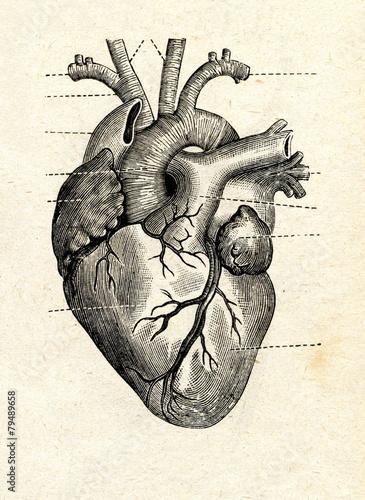 Leinwanddruck Bild Human heart