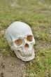 白い骸骨の顔